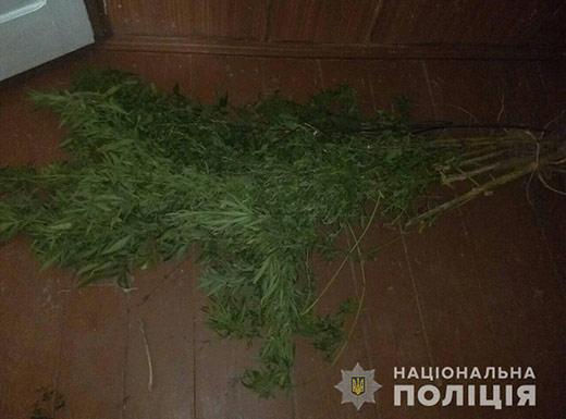 Поліція виявила незаконні посіви конопель на Рахівщині