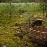 На Рахівщині збираючи гриби, заблукали дві жінки –пошуки тривають