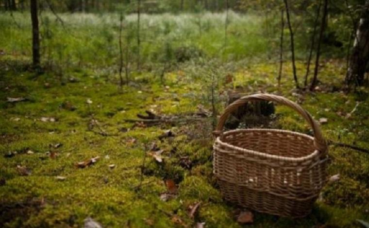 На Великоберезнянщині чоловік пішов до лісу і зник