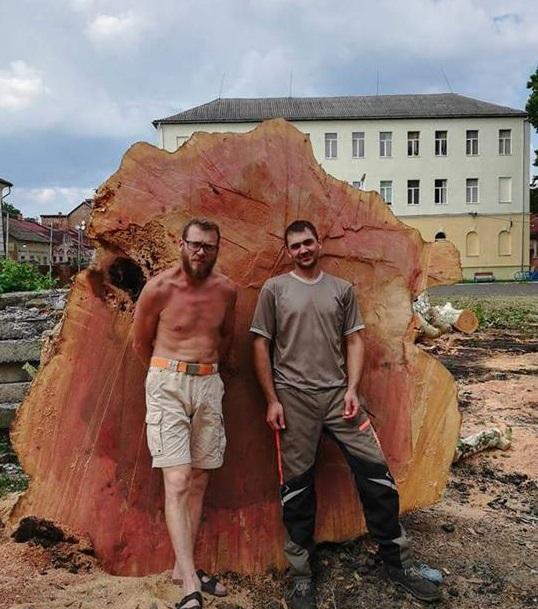 В Мукачеві безжально зрубали столітній платан (фото)