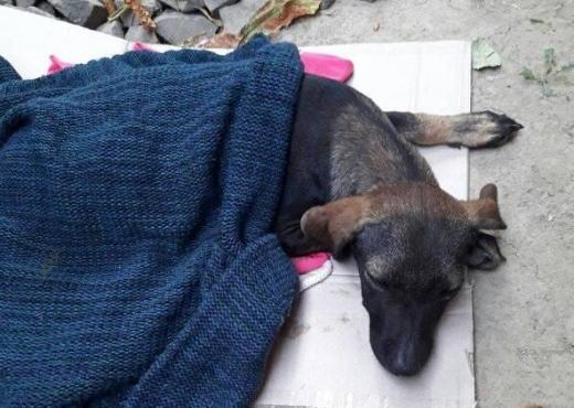 В Ужгороді діти жорстоко знущаються з тварин