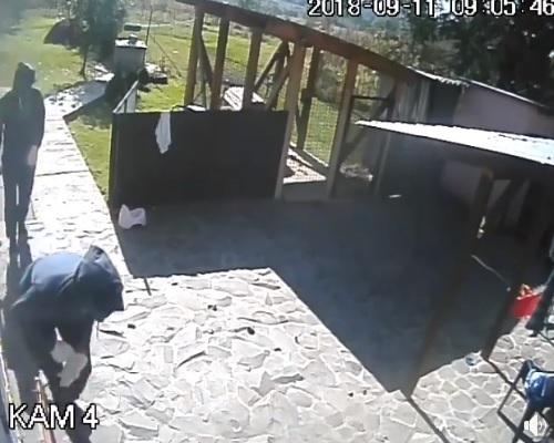 Відео грабежу обійстя на Хустщині (відео)