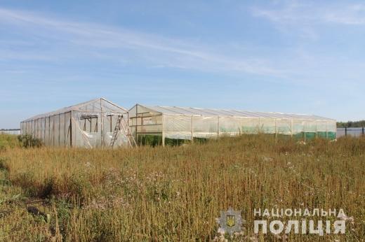 У теплицях мешканця Мукачівщини виявили марихуани на мільйони гривень (ФОТО, ВІДЕО)