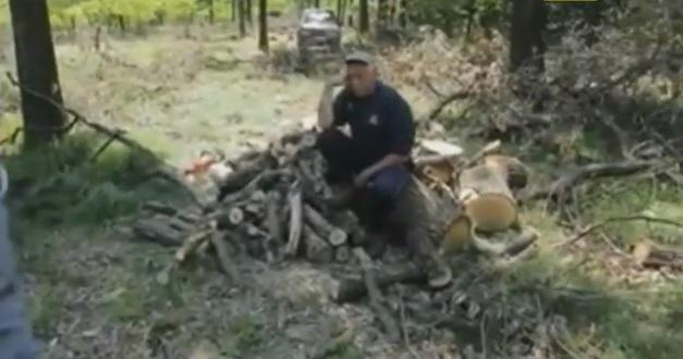 Лісова мафія Закарпаття зачищає у соцмережах ролик про незаконні рубки (відео)