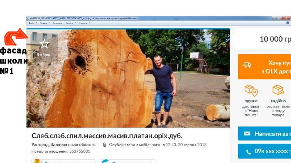 Хижацьке знищення дерев у Мукачеві