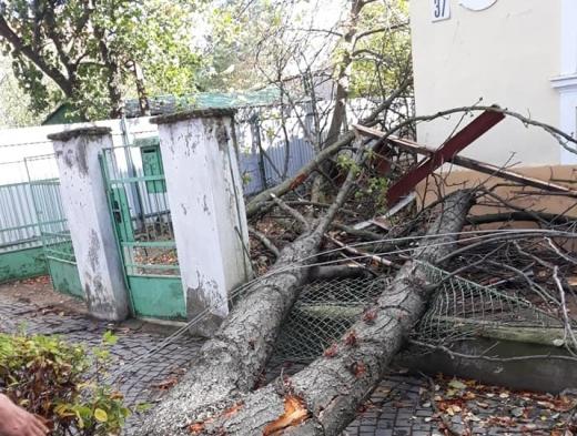 """Сильний вітер в Ужгороді """"наламав дрів"""": пошкоджено паркан, дах та вікна"""