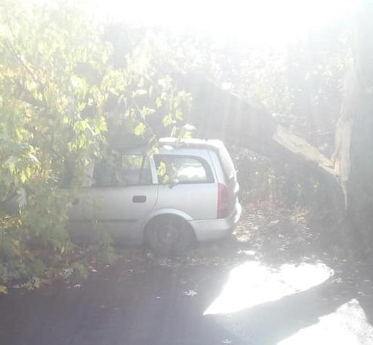 В Ужгороді гниле дерево впало на автівку (відео)