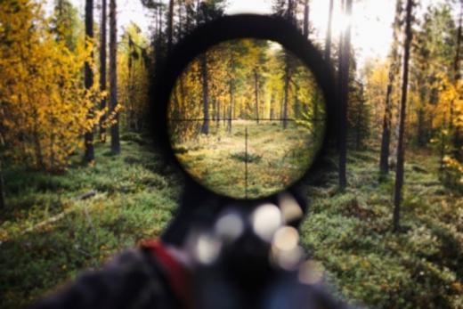 Через браконьєрство закарпатські лісівники перейшли на посилений режим роботи