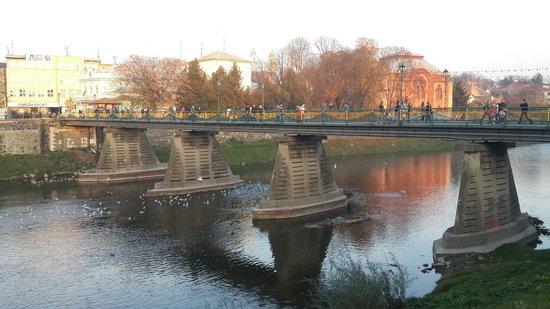 Під пішохідним мостом в Ужгороді лебеді примерзли до льоду