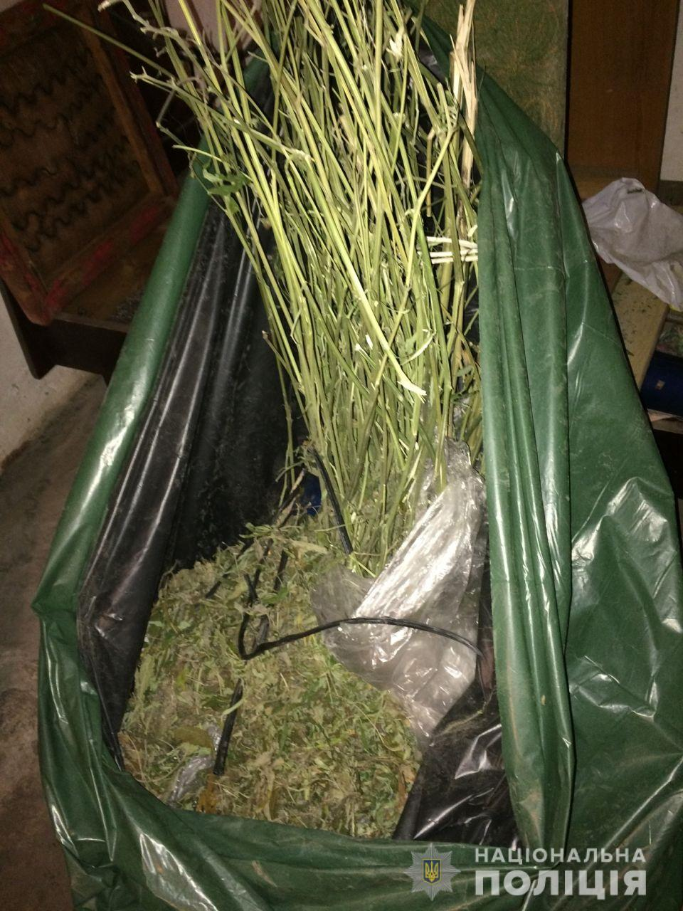 У підозрюваного в крадіжці закарпатця поліція знайшла марихуану та сухі стебла конопель