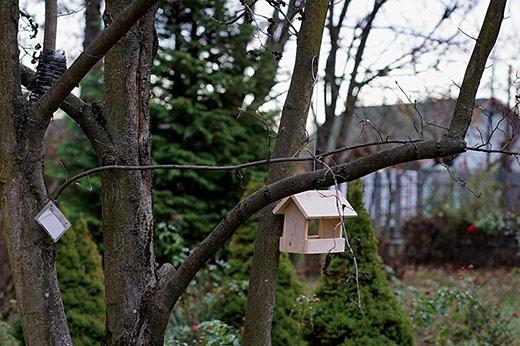 "На Закарпатті стартувала акція ""Нагодуй птахів взимку"""