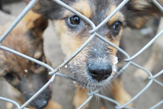 Ужгородському притулку для тварин потрібна допомога