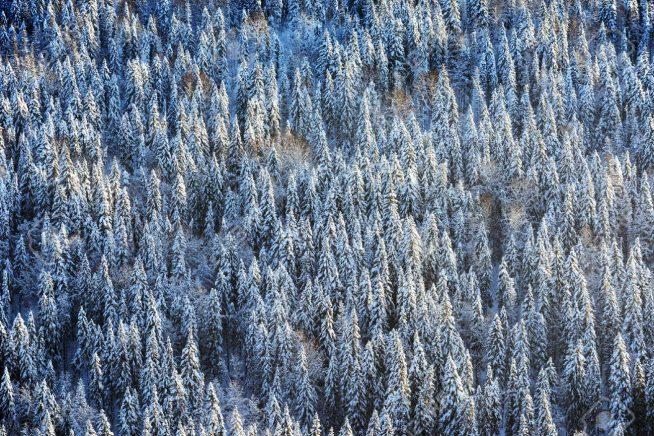 Із початку року в Закарпатській області проведено 1036 рейдів з охорони мисливських угідь