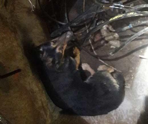 На Ужгородщині врятували песика, що впав у каналізацію
