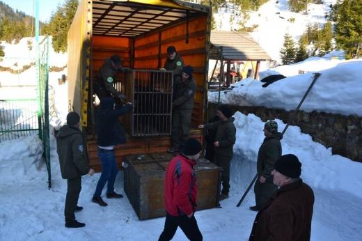 """П'ятеро бурих медведів, яких утримували в жахливих умовах, """"переїхали"""" до реабілітаційного центру у Нацпарку """"Синевир"""""""