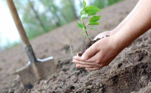 """Лісівники Закарпаття оголосили фотоконкурс """"Посади дерево"""""""
