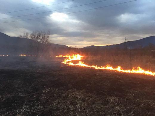 За дві доби на Закарпатті зафіксовано 11 пожеж в екосистемах