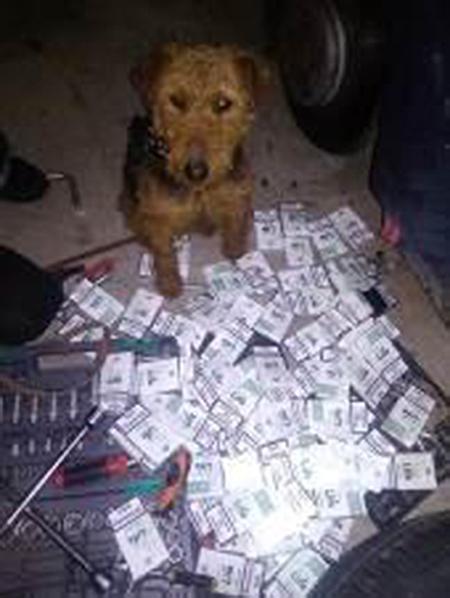 На Закарпатті службовий собака прикордонників допоміг знайти у авто тайники з цигарками