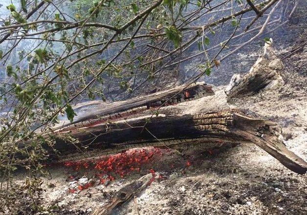 На Ужгородщині знову намагалися спалити ліс