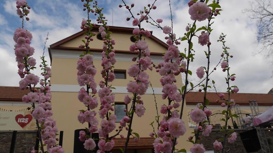 В Ужгороді почався фестиваль рожевого вина – «Sakura Wine»
