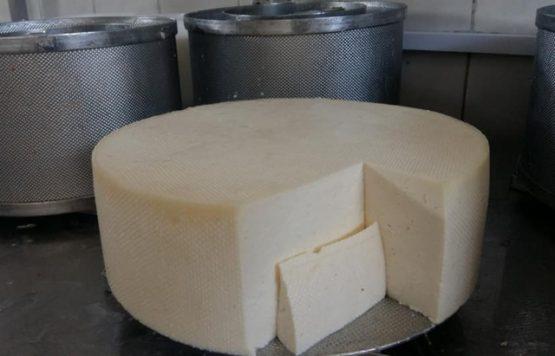 Закарпатські сировари виготовили унікальний сир із цибулею