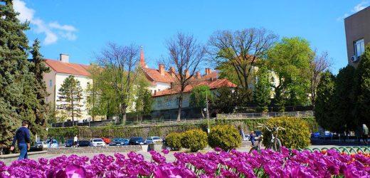 Квітуче весняне шаленство очима ужгородки Ольги Тимофієвої (фото)