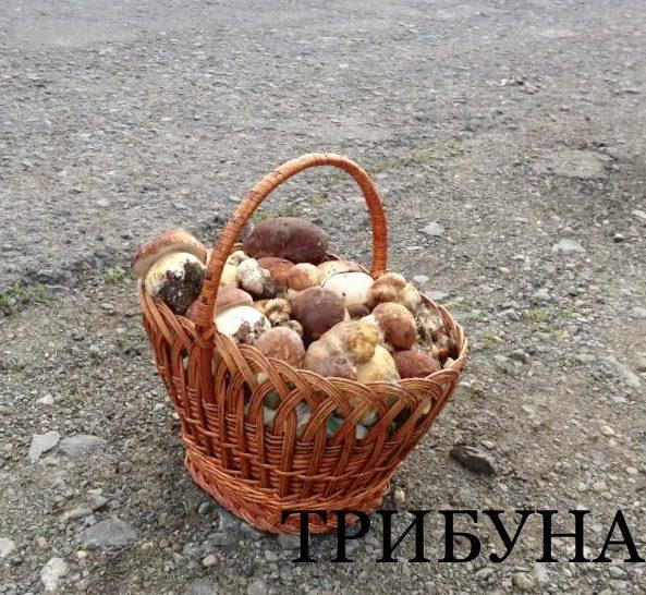 На Великоберезнянщині – перший урожай білих грибів (фото)