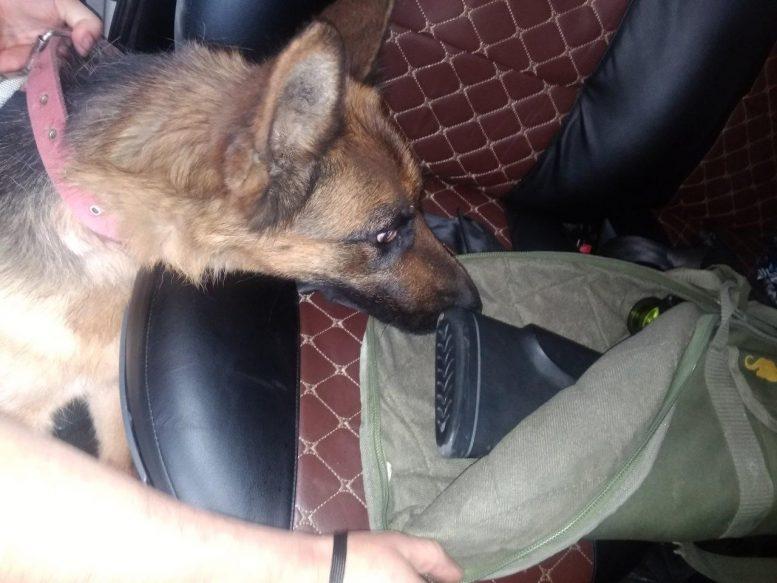 На Закарпатті собака прикордонників виявив гвинтівку у мікроавтобусі