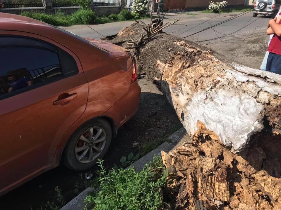 У Сваляві трухляве дерево впало на автомобіль (ФОТОФАКТ)