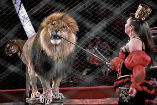 Містяни просять заборонити виступи цирків з тваринами в Ужгороді