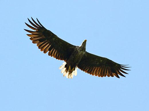 На Берегівщині лісівники знайшли гніздо рідкісного червонокнижного птаха