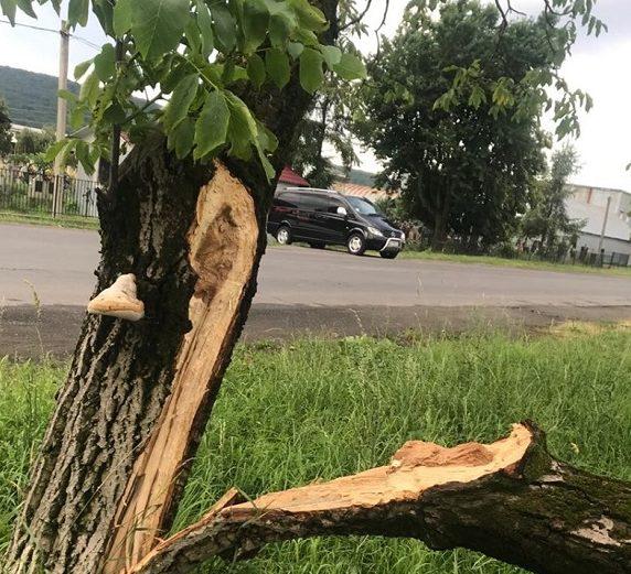 В Оноківцях негода повалила дерево на дорогу (фото)