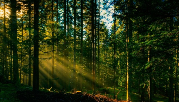 Лісівники Ужгородщини вирощують посадматеріал для зеленого декору та ландшафтного дизайну