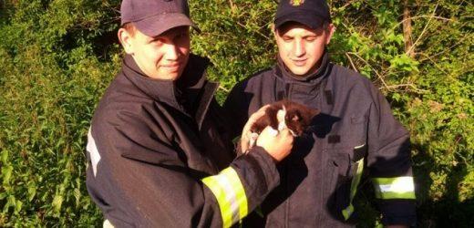 Закарпатські рятувальники визволили кошеня з кам'яної пастки (ФОТО)