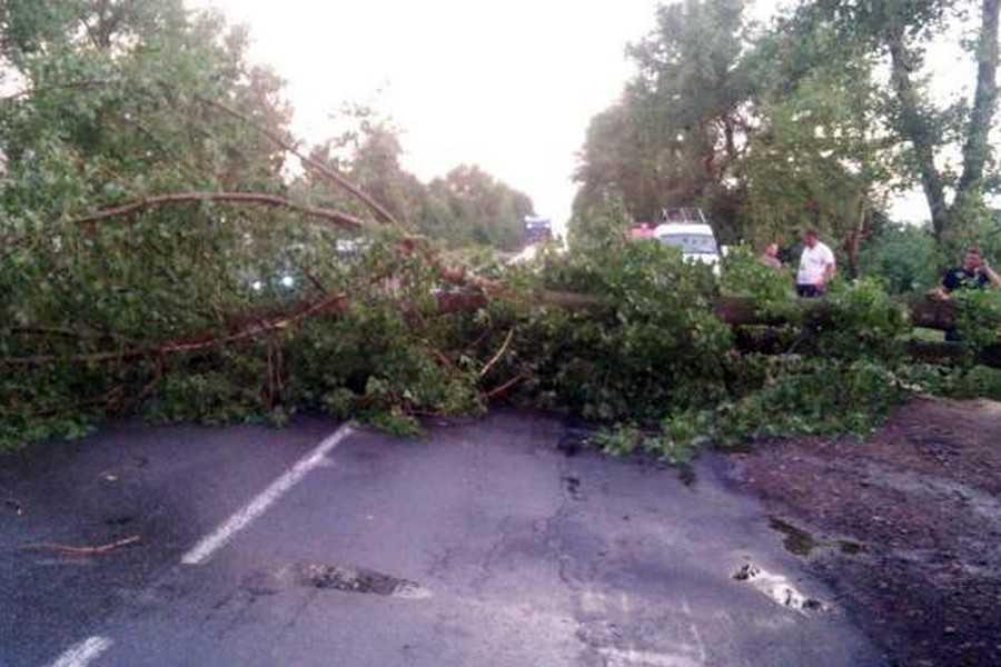 Учорашня негода повалила багато дерев на Закарпатті