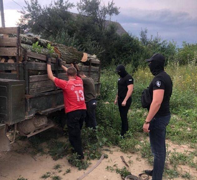 На Берегівщині викрито майстра лісу ДП «Берегівське ЛГ», який отримав 13 000 грн хабара