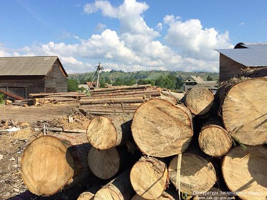 Правоохоронці викрили на Рахівщині схему розкрадання деревини посадовцями лісгоспу
