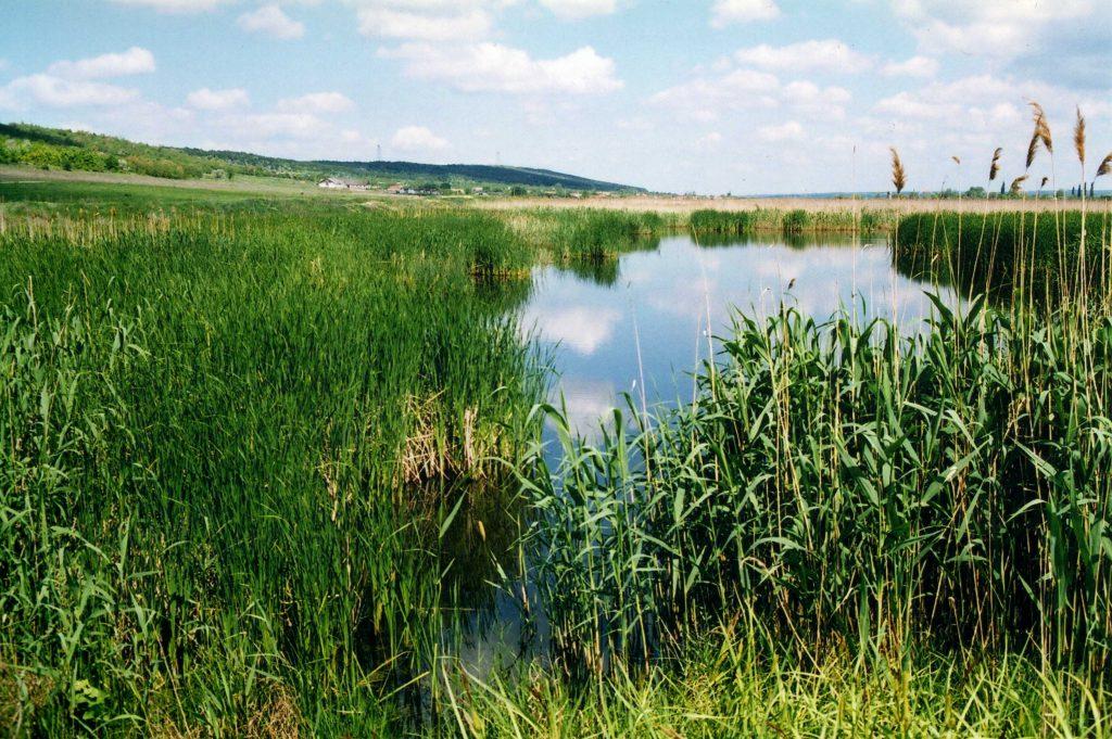 На Закарпатті затвердили ще кілька водно-болотних угідь міжнародного значення