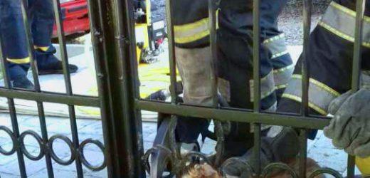 В Хусті рятувальники визволяли песика, що застряг у металевій огорожі