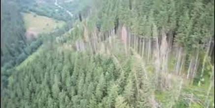 Закарпатські правоохоронці викрили незаконну схему розкрадання деревини у Карпатському біосферному заповіднику (ВІДЕО)