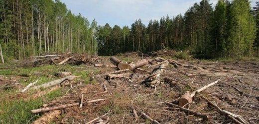 Закарпатці можуть можуть здійснити онлайн фіксацію правопорушень, пов'язаних з вирубкою лісу