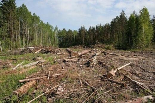Прокуратура розпочала кримінальне провадження через незаконну рубку лісу на Тячівщині