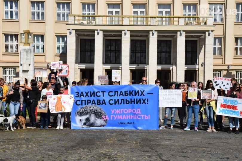 Ужгород вже утретє долучився до Всеукраїнського маршу за права тварин