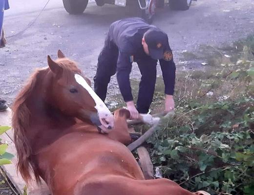 В Ужгороді рятувальники витягли коня з шахти комунікаційних мереж