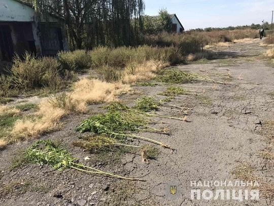 На території приватного підприємства на Ужгородщині поліція виявила посаджені коноплі