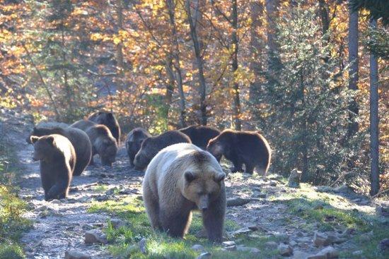 На Міжгірщині розширять територію реабілітаційного центру для бурих ведмедів