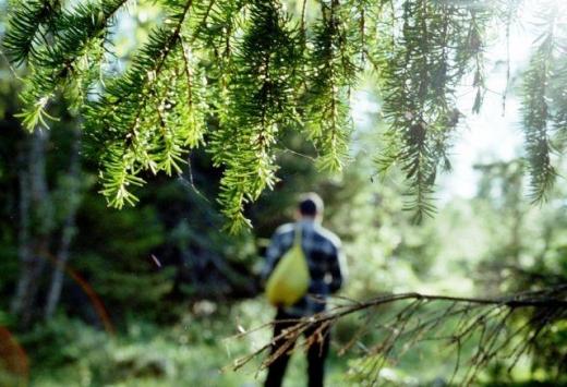На Тячівщині уночі шукали підлітків, які заблукали в лісі під час збирання грибів