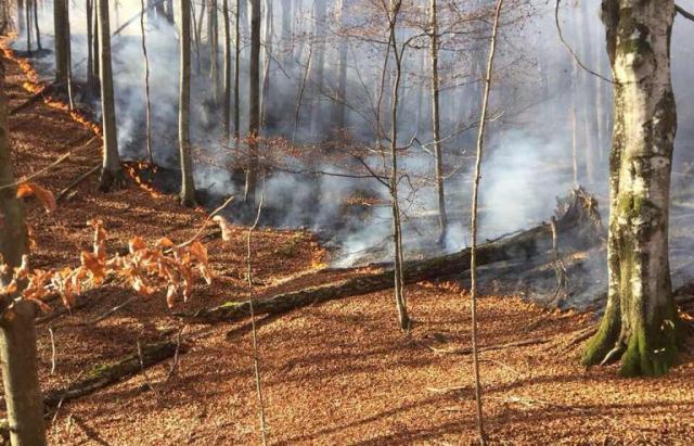 За минулу добу у лісах Закарпаття тричі гасили пожежі
