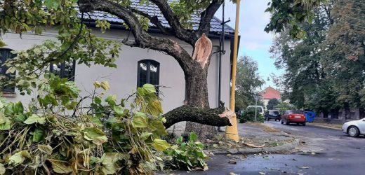В Ужгороді дерево впало на автомобільну дорогу (фото)