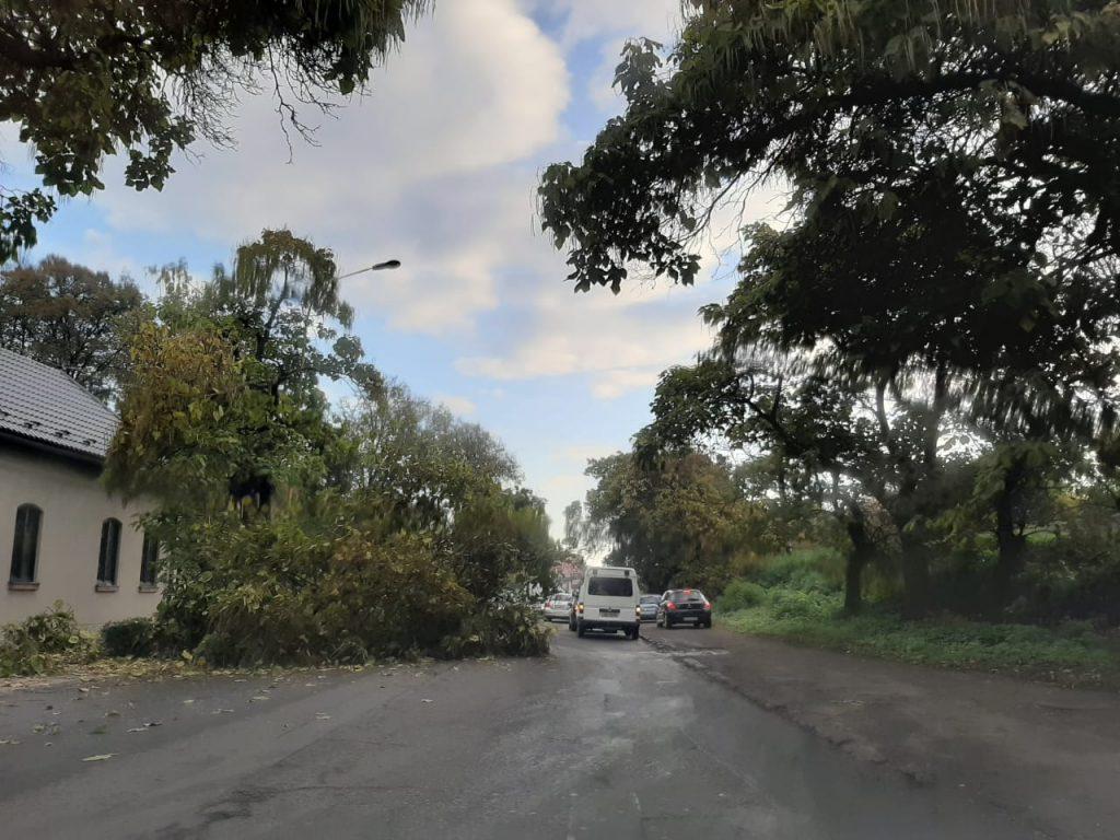 На автомобільну дорогу в Ужгороді дерево впало  (фото)